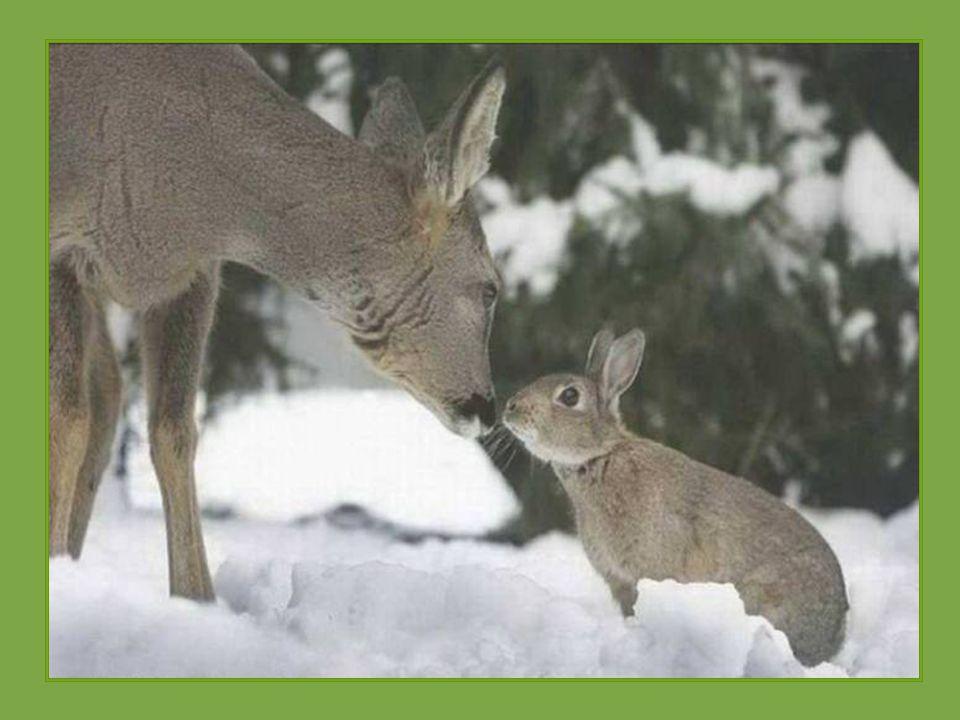 Disney v reálném životě jelínek Bambi a králík Thumper Bambi jako malý koloušek ztratil matku. V ten den se u něho objevil divoký králík a udělal si v