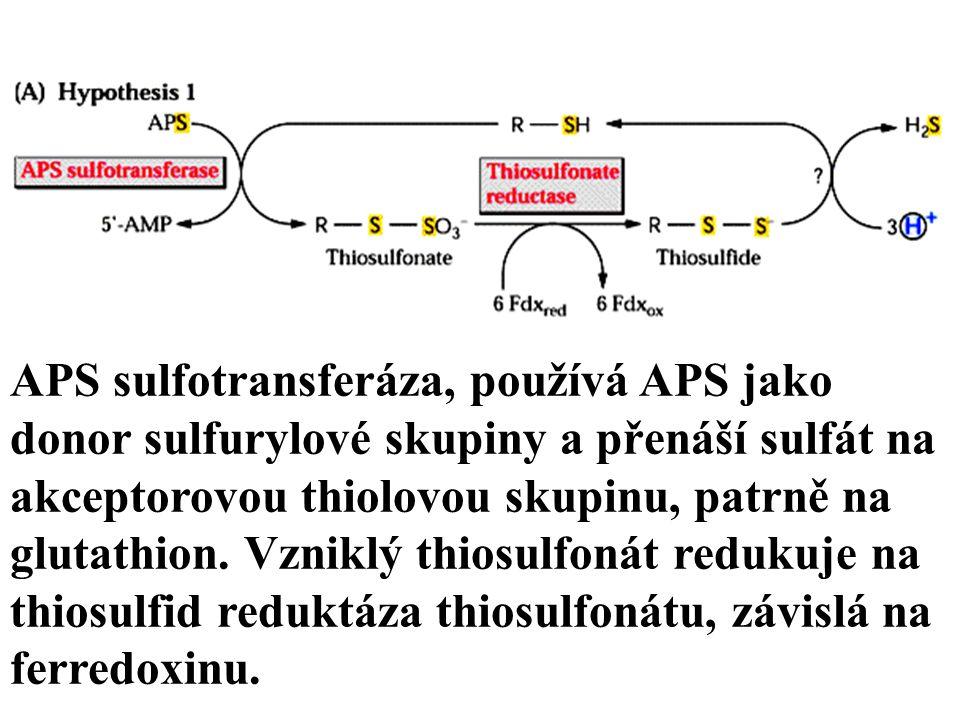 APS sulfotransferáza, používá APS jako donor sulfurylové skupiny a přenáší sulfát na akceptorovou thiolovou skupinu, patrně na glutathion.