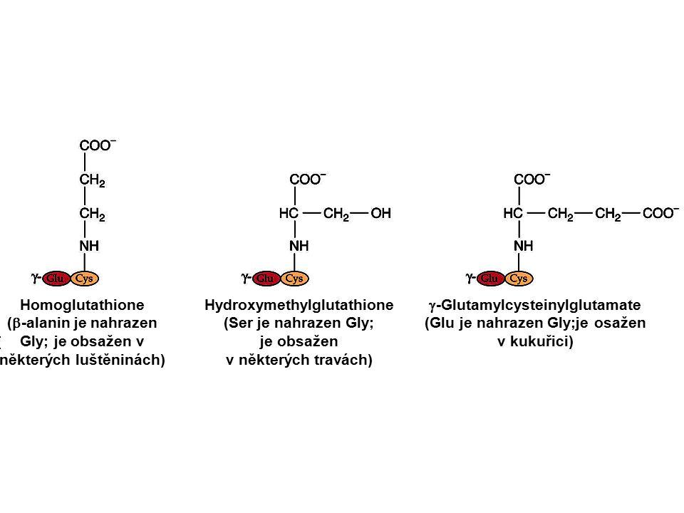 Homoglutathione (  -alanin je nahrazen Gly; je obsažen v některých luštěninách) Hydroxymethylglutathione (Ser je nahrazen Gly; je obsažen v některých travách)  -Glutamylcysteinylglutamate (Glu je nahrazen Gly;je osažen v kukuřici)