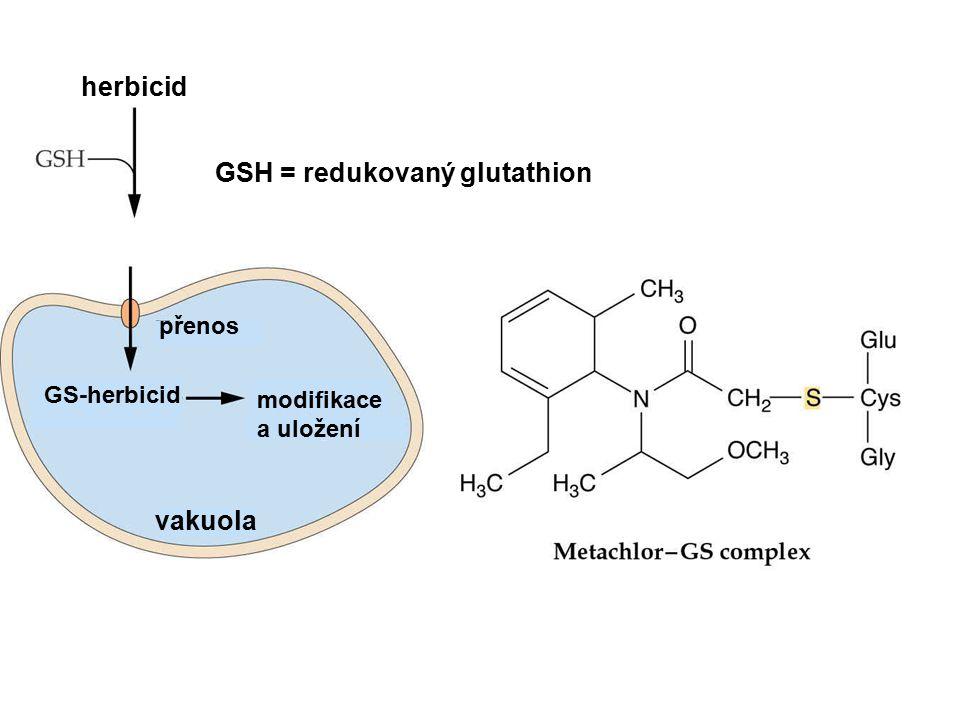 herbicid GS-herbicid vakuola modifikace a uložení přenos GSH = redukovaný glutathion