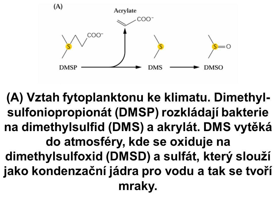 (A) Vztah fytoplanktonu ke klimatu.