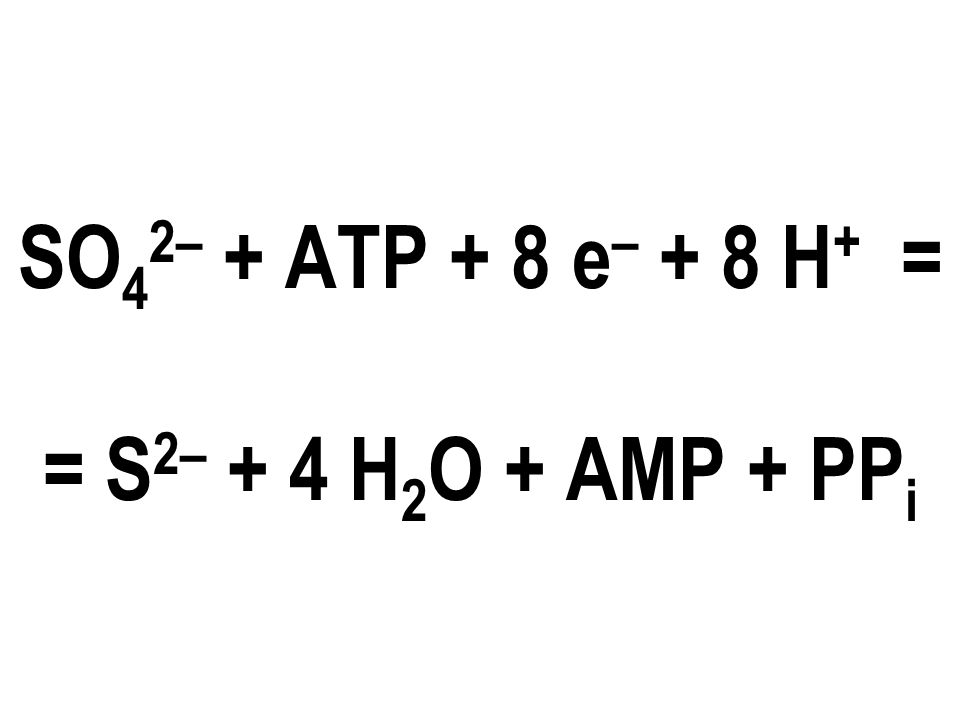 SO 4 2– + ATP + 8 e – + 8 H + = = S 2– + 4 H 2 O + AMP + PP i