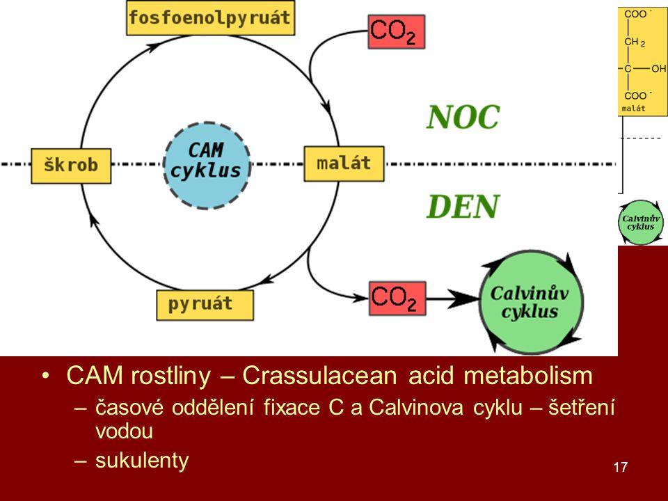 17 C3, C4 a CAM rostliny C3 rostliny – produkt C3 – glycerát C4 rostliny – produkt C4 – oxalacetát –kukuřice, cukrová třtina, čirok, proso –prostorové