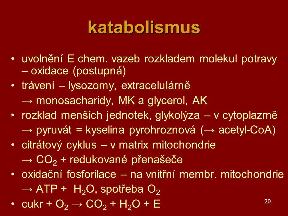 20 katabolismus uvolnění E chem.