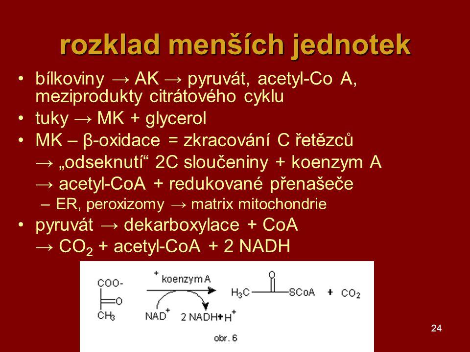 """24 rozklad menších jednotek bílkoviny → AK → pyruvát, acetyl-Co A, meziprodukty citrátového cyklu tuky → MK + glycerol MK – β-oxidace = zkracování C řetězců → """"odseknutí 2C sloučeniny + koenzym A → acetyl-CoA + redukované přenašeče –ER, peroxizomy → matrix mitochondrie pyruvát → dekarboxylace + CoA → CO 2 + acetyl-CoA + 2 NADH"""