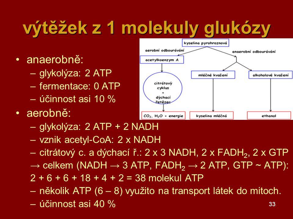 33 výtěžek z 1 molekuly glukózy anaerobně: –glykolýza: 2 ATP –fermentace: 0 ATP –účinnost asi 10 % aerobně: –glykolýza: 2 ATP + 2 NADH –vznik acetyl-CoA: 2 x NADH –citrátový c.
