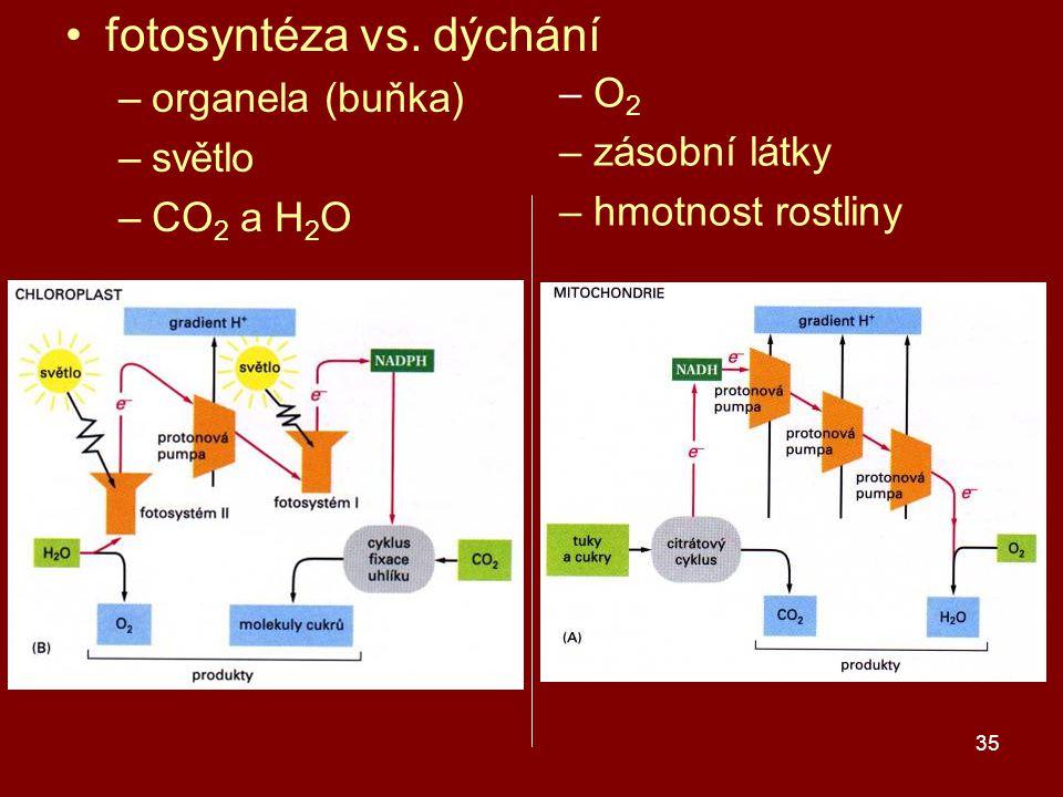 35 fotosyntéza vs. dýchání –organela (buňka) –světlo –CO 2 a H 2 O – O 2 – zásobní látky – hmotnost rostliny