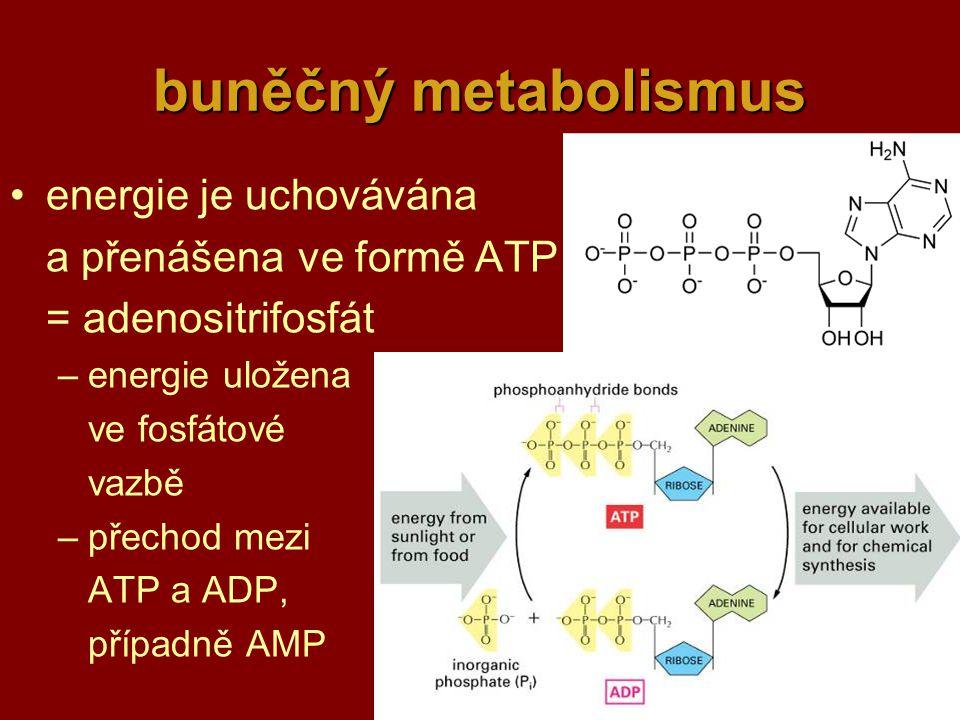 4 buněčný metabolismus energie je uchovávána a přenášenave formě ATP = adenositrifosfát –energie uložena ve fosfátové vazbě –přechod mezi ATP a ADP, případně AMP