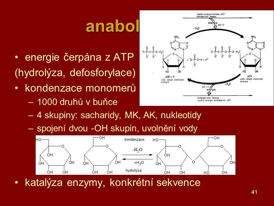 41 anabolismus energie čerpána z ATP (hydrolýza, defosforylace) kondenzace monomerů –1000 druhů v buňce –4 skupiny: sacharidy, MK, AK, nukleotidy –spojení dvou -OH skupin, uvolnění vody katalýza enzymy, konkrétní sekvence