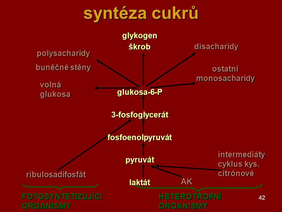42 syntéza cukrů AK polysacharidy buněčné stěny volná glukosa disacharidy ostatní monosacharidy ribulosadifosfát intermediáty cyklus kys. citrónové FO