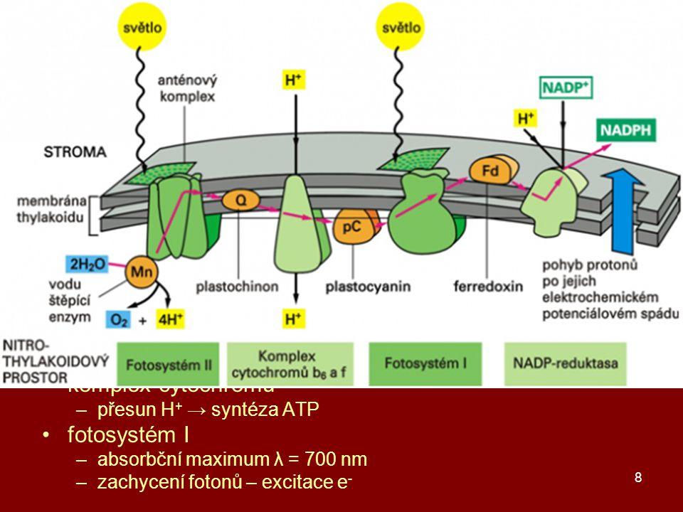 8 primární fáze fotosyntézy vznik ATP a NADPH → sekundární fáze fotolýza vody → e -, H +, ½ O 2 absorbce fotonů fotosyntetickými barvivy –anténní komplexy: chlorofyl a a b, karoten β excitace e - barviv → přenos e - redoxními přenašeči –feofytin, plastochinon, plastocyanin, fylochinon, ferredoxin –2 fotony na 1 e - fotosystém II –absorbční maximum λ = 680 nm –zachycení fotonů – excitace e - komplex cytochromů –přesun H + → syntéza ATP fotosystém I –absorbční maximum λ = 700 nm –zachycení fotonů – excitace e -