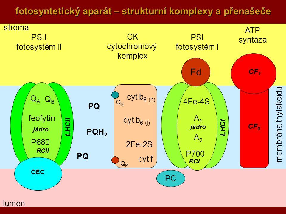 9 fotosyntetický aparát – strukturní komplexy a přenašeče stroma membrána thylakoidu lumen CF 0 PSII fotosystém II PSI fotosystém I CK cytochromový komplex QAQA QBQB P680 feofytin ATP syntáza QPQP QNQN cyt b 6 (l) cyt b 6 (h) 2Fe-2S cyt f PC P700 A0A0 4Fe-4S A1A1 OEC Fd jádro RCII RCI CF 1 LHCII LHCI PQ PQH 2 PQ