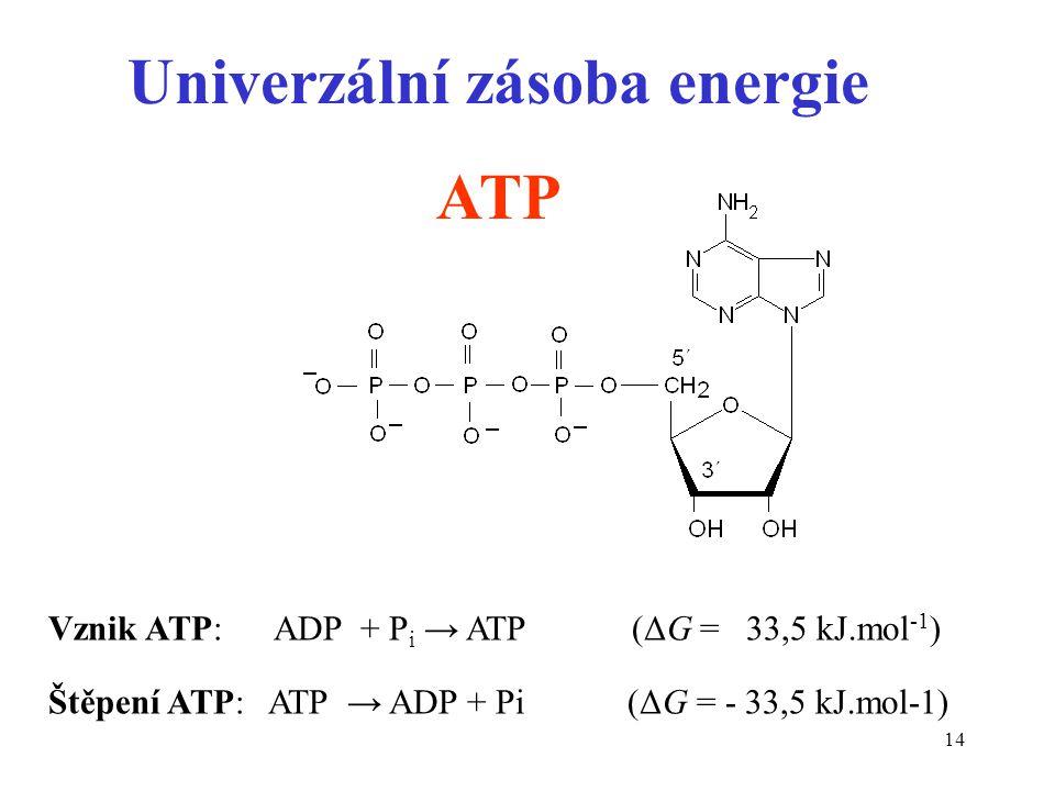 14 Univerzální zásoba energie ATP Vznik ATP: ADP + P i → ATP (ΔG = 33,5 kJ.mol -1 ) Štěpení ATP: ATP → ADP + Pi (ΔG = - 33,5 kJ.mol-1)