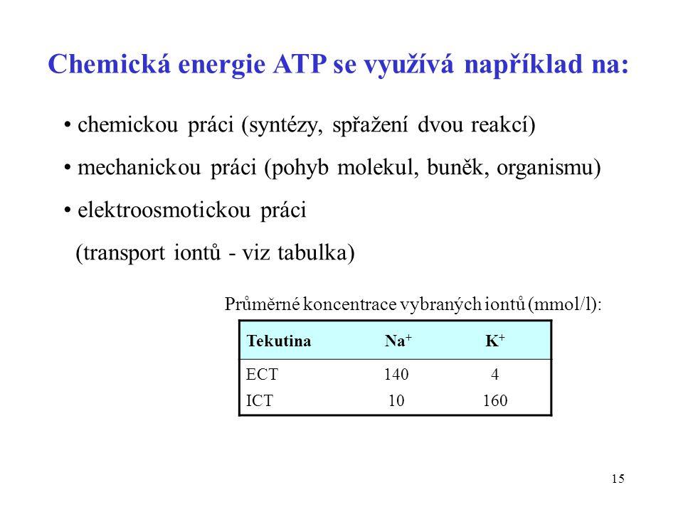 15 Chemická energie ATP se využívá například na: chemickou práci (syntézy, spřažení dvou reakcí) mechanickou práci (pohyb molekul, buněk, organismu) e