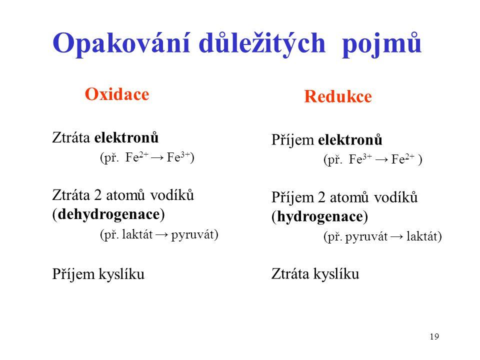 19 Opakování důležitých pojmů Redukce Příjem elektronů (př. Fe 3+ → Fe 2+ ) Příjem 2 atomů vodíků (hydrogenace) (př. pyruvát → laktát) Ztráta kyslíku