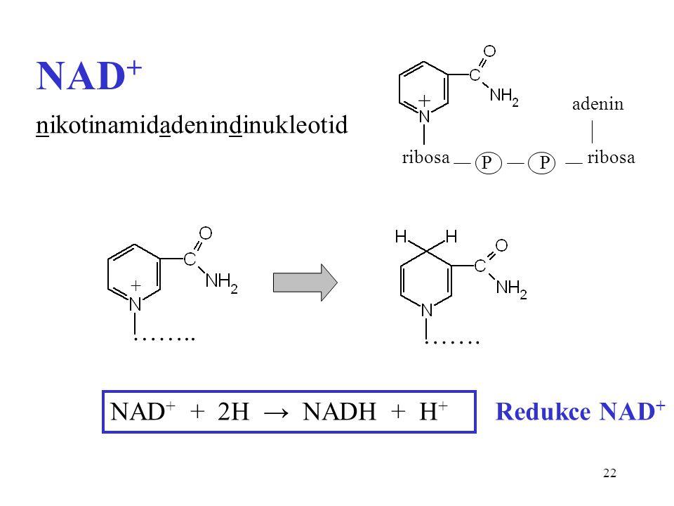 22 NAD + NAD + + 2H → NADH + H + Redukce NAD + + ribosa PP adenin nikotinamidadenindinukleotid …….. ……. +