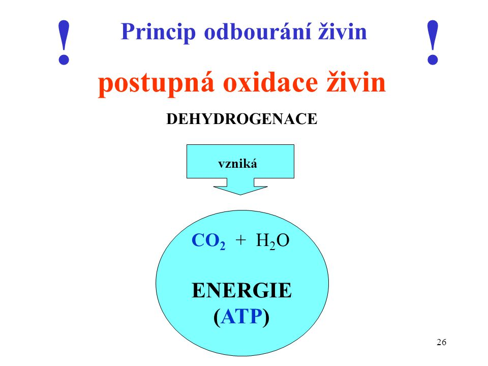 26 Princip odbourání živin postupná oxidace živin DEHYDROGENACE CO 2 + H 2 O ENERGIE (ATP) !! vzniká