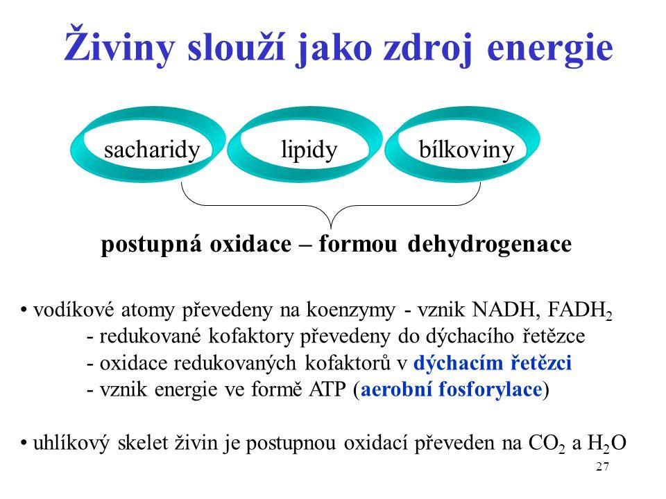 27 Živiny slouží jako zdroj energie sacharidy lipidy bílkoviny postupná oxidace – formou dehydrogenace vodíkové atomy převedeny na koenzymy - vznik NA