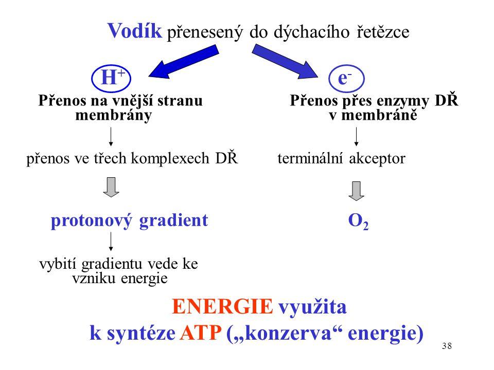 38 Vodík přenesený do dýchacího řetězce Přenos na vnější stranu Přenos přes enzymy DŘ membrány v membráně přenos ve třech komplexech DŘ terminální akc