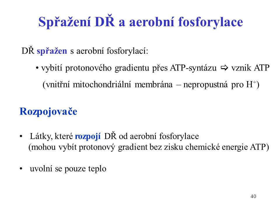 40 Spřažení DŘ a aerobní fosforylace Rozpojovače Látky, které rozpojí DŘ od aerobní fosforylace (mohou vybít protonový gradient bez zisku chemické ene