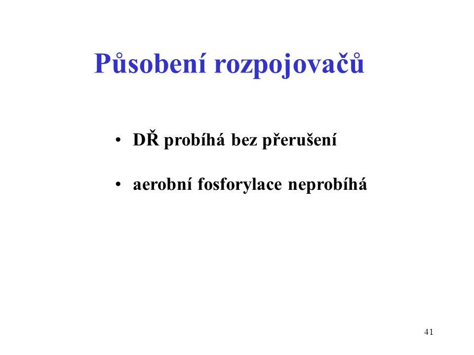 41 Působení rozpojovačů DŘ probíhá bez přerušení aerobní fosforylace neprobíhá