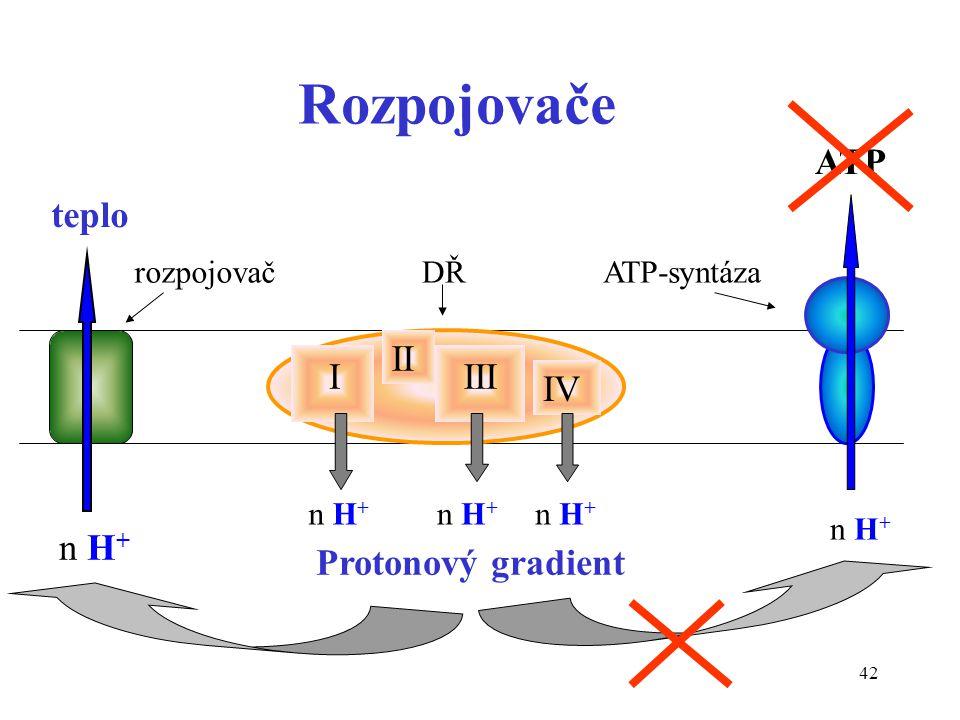 42 Rozpojovače I II III IV n H + Protonový gradient n H + teplo ATP DŘATP-syntázarozpojovač