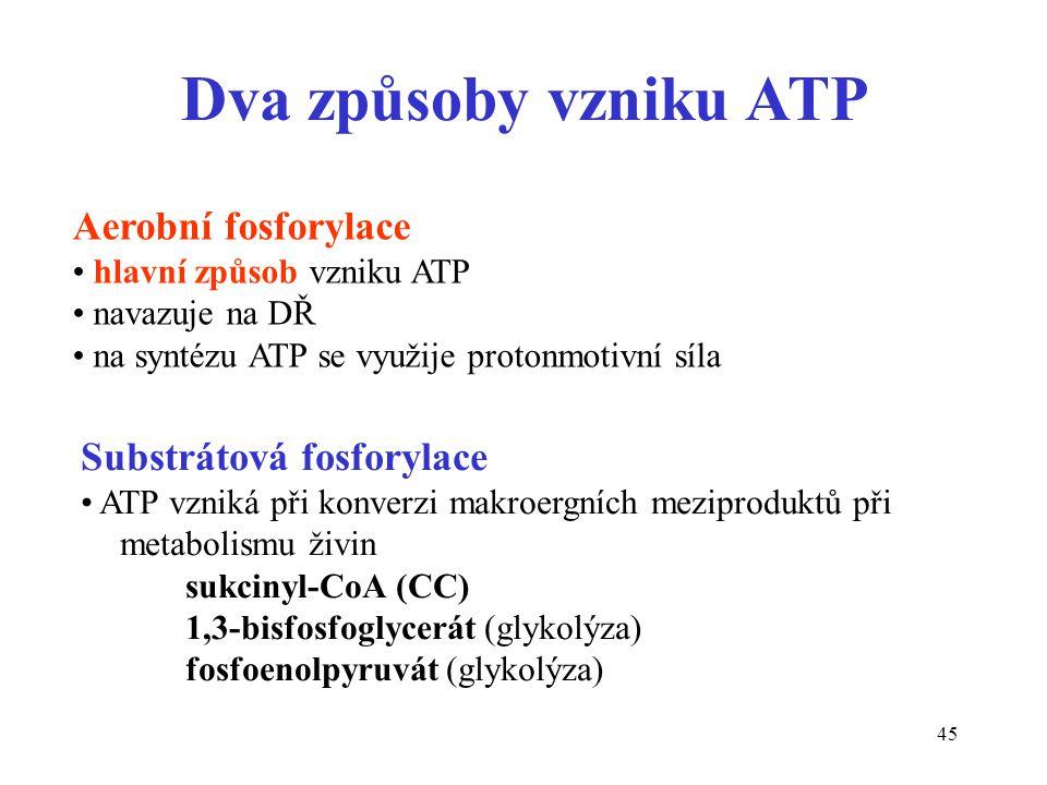 45 Substrátová fosforylace ATP vzniká při konverzi makroergních meziproduktů při metabolismu živin sukcinyl-CoA (CC) 1,3-bisfosfoglycerát (glykolýza)