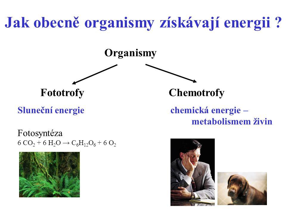 5 Jak obecně organismy získávají energii ? Organismy Fototrofy Chemotrofy Sluneční energie chemická energie – metabolismem živin Fotosyntéza 6 CO 2 +