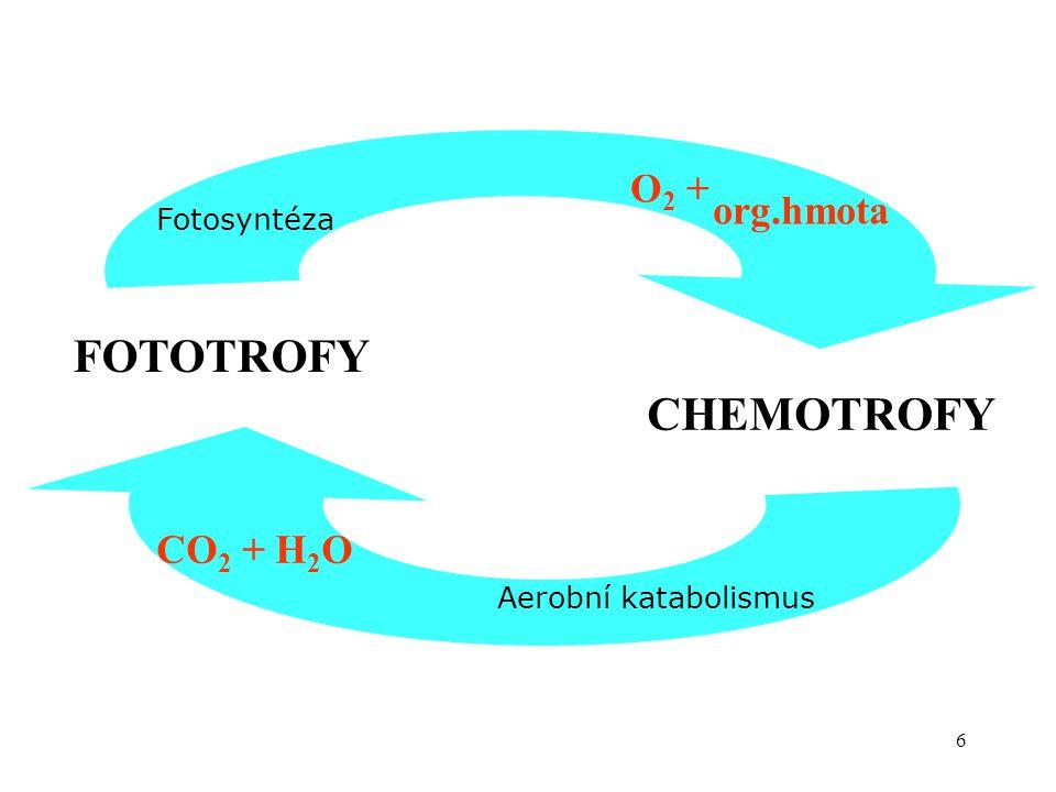 17 Další makroergní sloučeniny pyrimidinové nukleosidtrifosfáty: UTP - pro aktivaci glukosy (syntéza glykogenu) CTP - aktivace cholinu při syntéze fosfolipidů purinové nukleosidtrifosfáty GTP - při proteosyntéze metabolity s vysokým stupněm energie kreatinfosfát – při svalové práci fosfoenolpyruvát – meziprodukt glykolýzy thioestery sukcinyl-CoA – při biosyntéze hemu