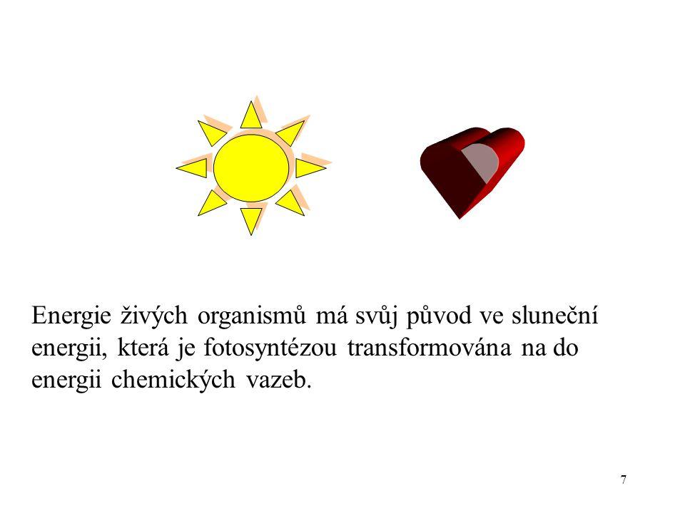 7 Energie živých organismů má svůj původ ve sluneční energii, která je fotosyntézou transformována na do energii chemických vazeb.