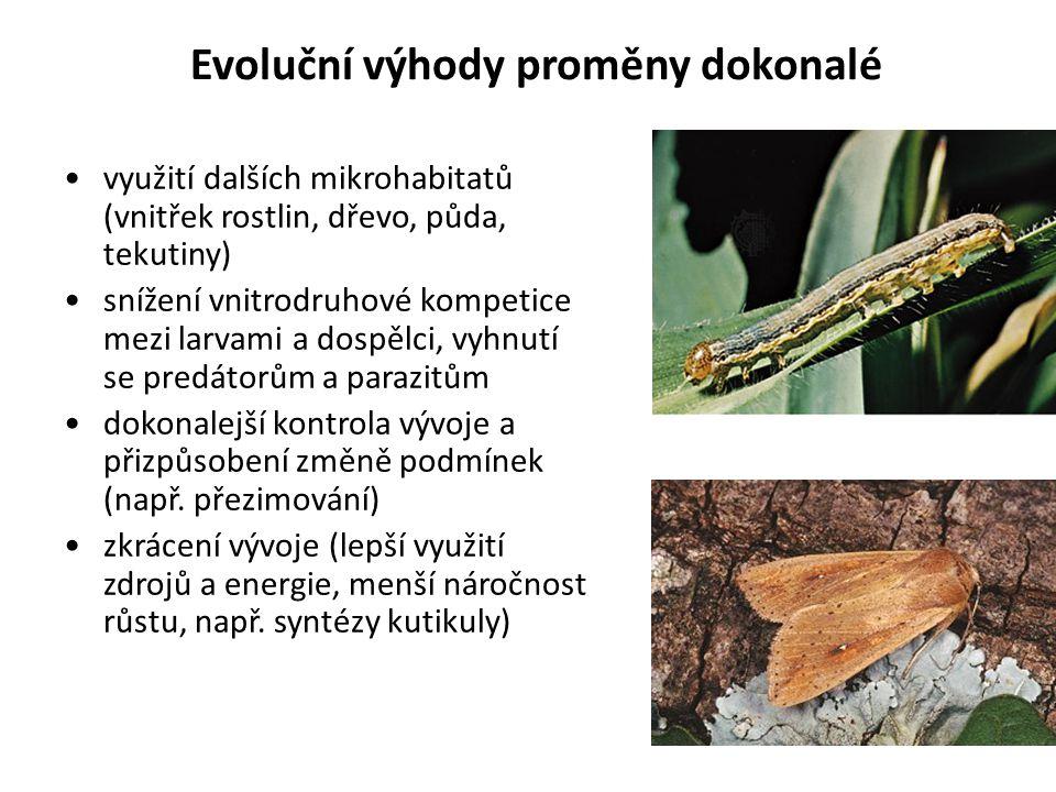 Evoluční výhody proměny dokonalé využití dalších mikrohabitatů (vnitřek rostlin, dřevo, půda, tekutiny) snížení vnitrodruhové kompetice mezi larvami a