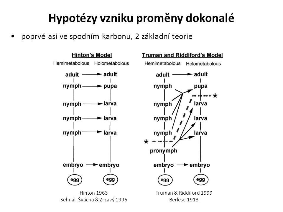 Hypotézy vzniku proměny dokonalé poprvé asi ve spodním karbonu, 2 základní teorie Hinton 1963 Sehnal, Švácha & Zrzavý 1996 Truman & Riddiford 1999 Ber