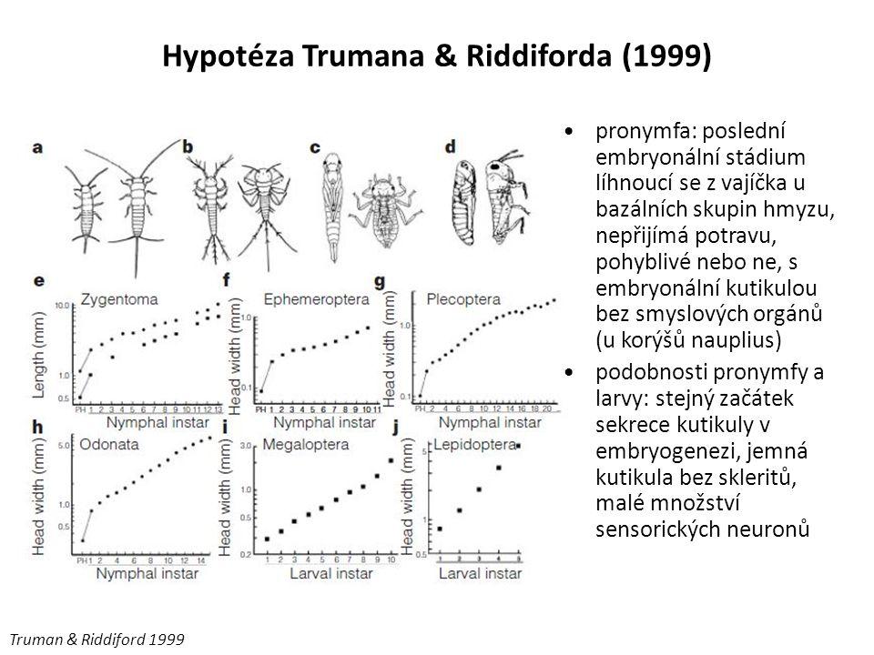 Hypotéza Trumana & Riddiforda (1999) Truman & Riddiford 1999 pronymfa: poslední embryonální stádium líhnoucí se z vajíčka u bazálních skupin hmyzu, ne