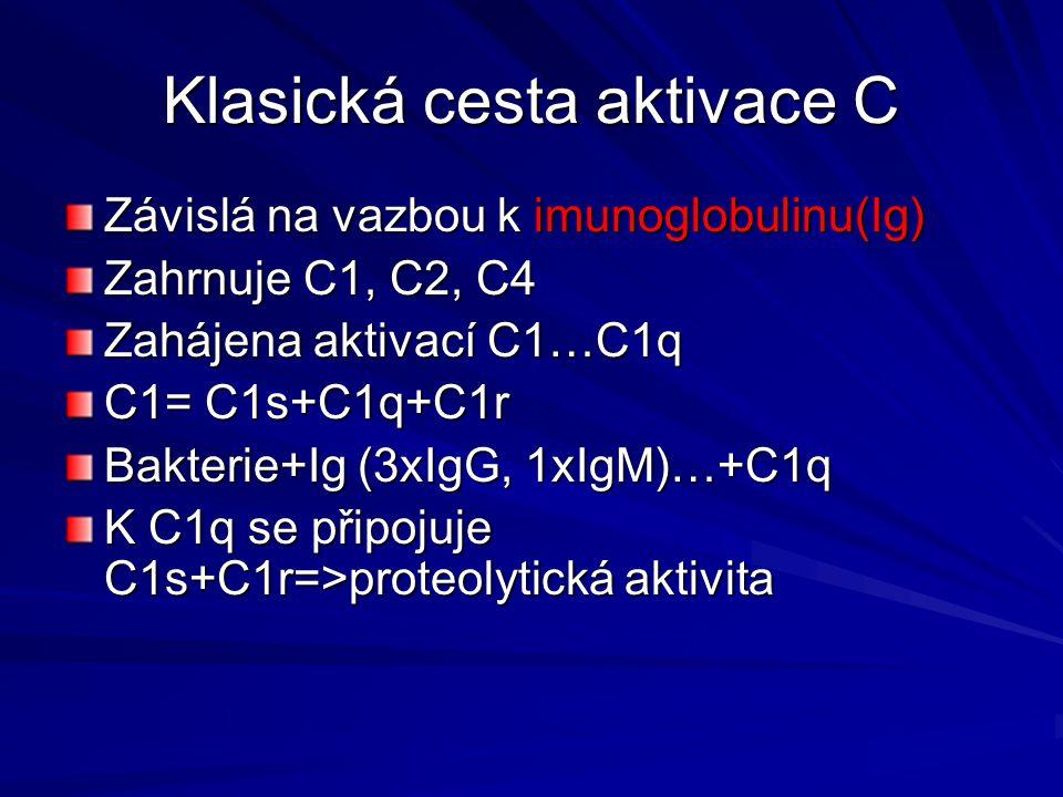 Klasická cesta aktivace C Závislá na vazbou k imunoglobulinu(Ig) Zahrnuje C1, C2, C4 Zahájena aktivací C1…C1q C1= C1s+C1q+C1r Bakterie+Ig (3xIgG, 1xIg