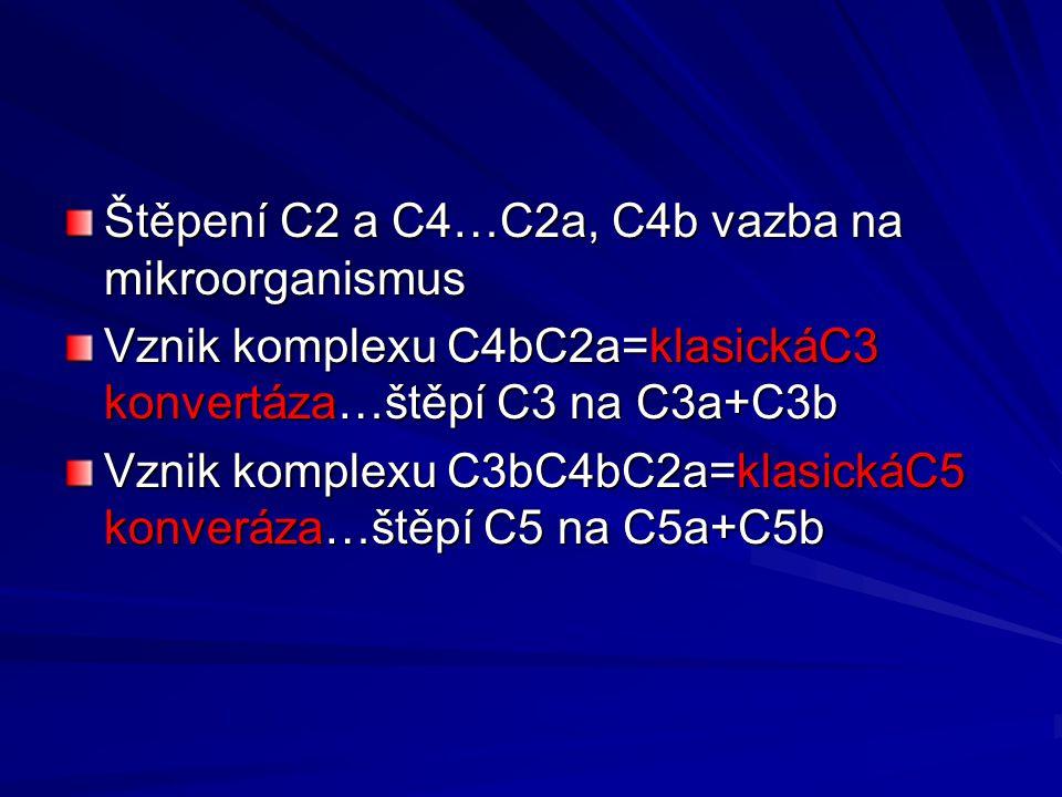 Štěpení C2 a C4…C2a, C4b vazba na mikroorganismus Vznik komplexu C4bC2a=klasickáC3 konvertáza…štěpí C3 na C3a+C3b Vznik komplexu C3bC4bC2a=klasickáC5