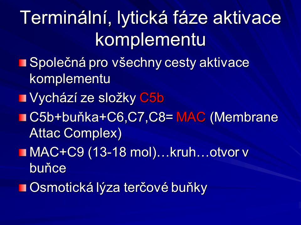 Terminální, lytická fáze aktivace komplementu Společná pro všechny cesty aktivace komplementu Vychází ze složky C5b C5b+buňka+C6,C7,C8= MAC (Membrane