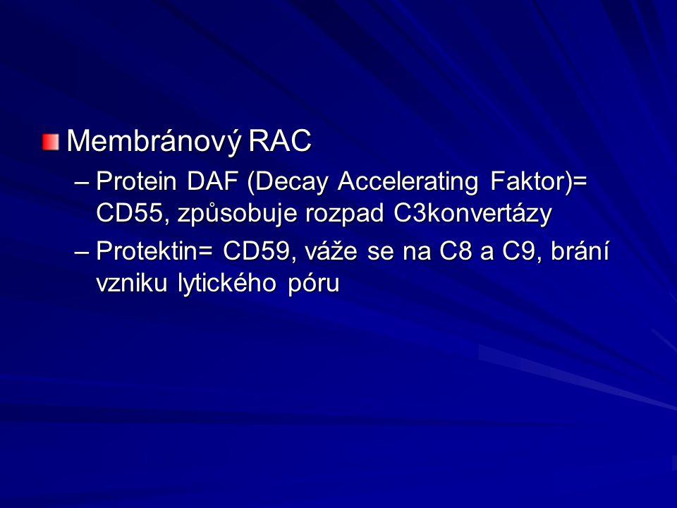 Membránový RAC –Protein DAF (Decay Accelerating Faktor)= CD55, způsobuje rozpad C3konvertázy –Protektin= CD59, váže se na C8 a C9, brání vzniku lytick