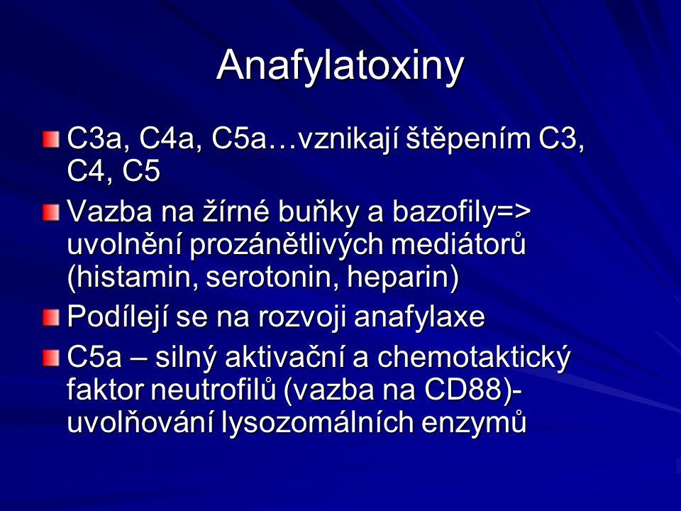 Anafylatoxiny C3a, C4a, C5a…vznikají štěpením C3, C4, C5 Vazba na žírné buňky a bazofily=> uvolnění prozánětlivých mediátorů (histamin, serotonin, hep