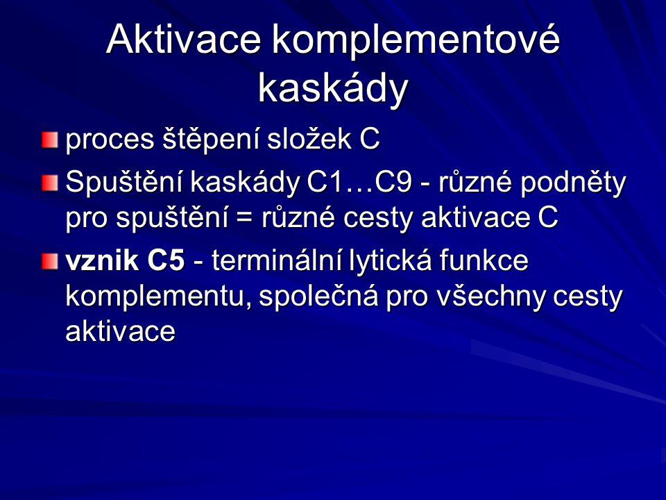 Aktivace komplementové kaskády proces štěpení složek C Spuštění kaskády C1…C9 - různé podněty pro spuštění = různé cesty aktivace C vznik C5 - terminá