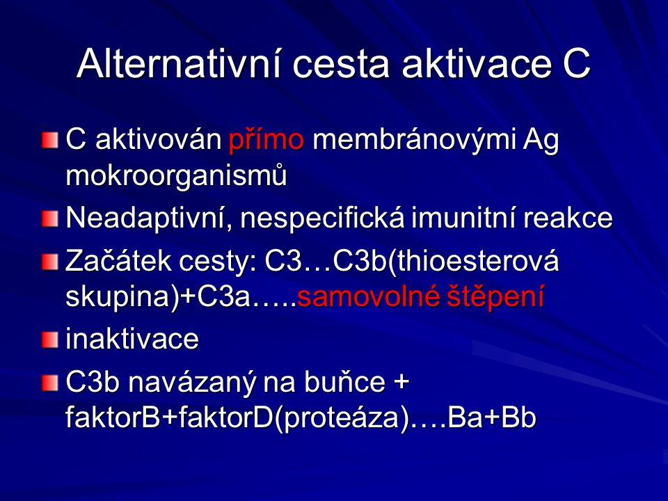 Vznik komplexu C3bBb=alternativníC3 konvertáza…další štěpení C3 na –C3b=opsonizace –C3a=chemotaxe Vznik komplexu C3bBbC3b=alternativníC5 konveráza…štěpení C5…C5a+C5b=>lytická fáze
