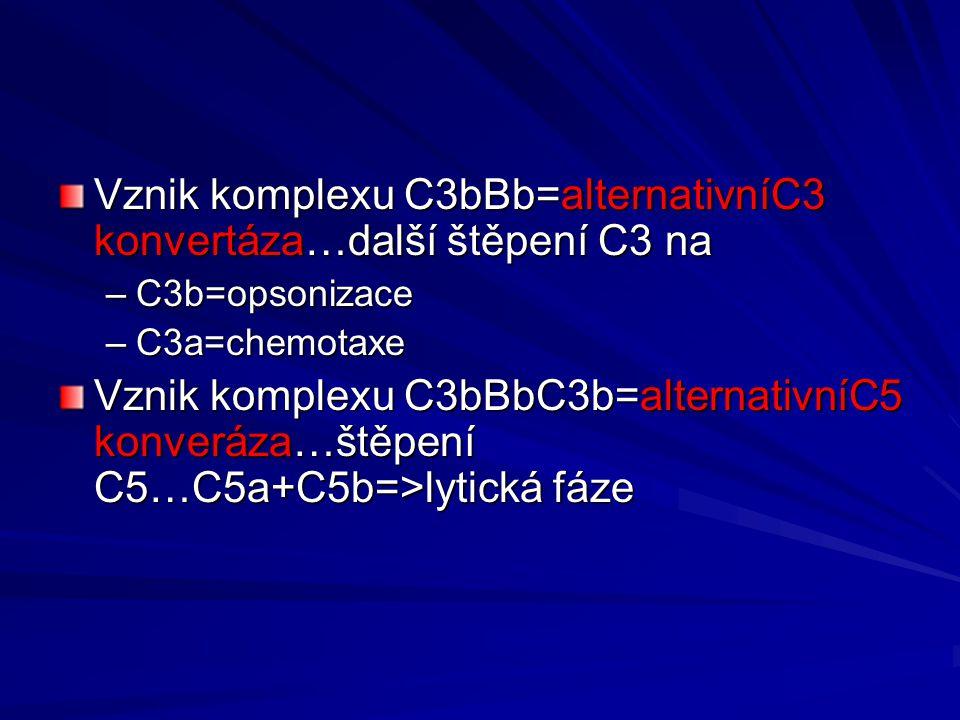 Vznik komplexu C3bBb=alternativníC3 konvertáza…další štěpení C3 na –C3b=opsonizace –C3a=chemotaxe Vznik komplexu C3bBbC3b=alternativníC5 konveráza…ště