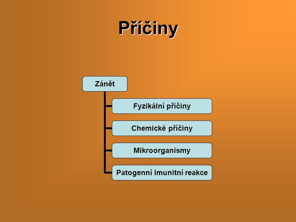 Příčiny Zánět Fyzikální příčiny Chemické příčiny Mikroorganismy Patogenní imunitní reakce