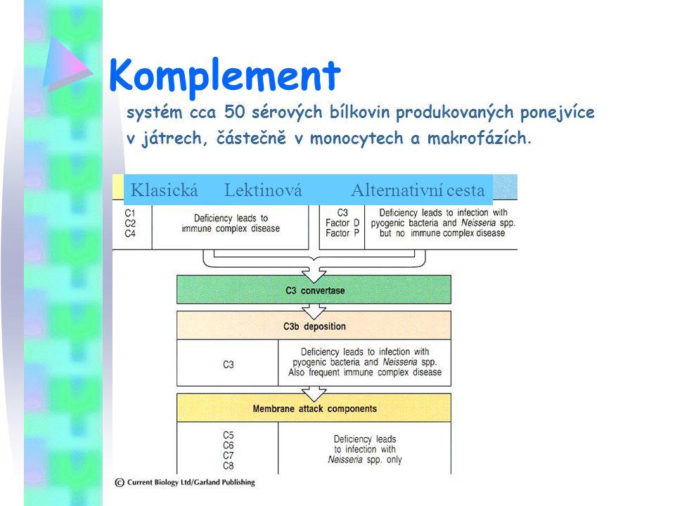 Komplement systém cca 50 sérových bílkovin produkovaných ponejvíce v játrech, částečně v monocytech a makrofázích. Klasická Lektinová Alternativní ces