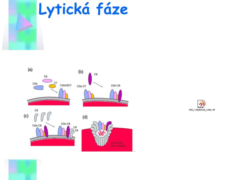 Lytická fáze