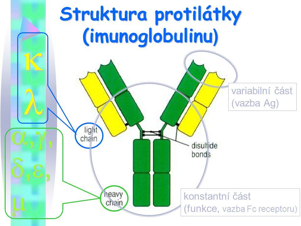 Struktura protilátky (imunoglobulinu )  ,,,,,,,,,,,,,,,, variabilní část (vazba Ag) konstantní část (funkce, vazba Fc receptoru)