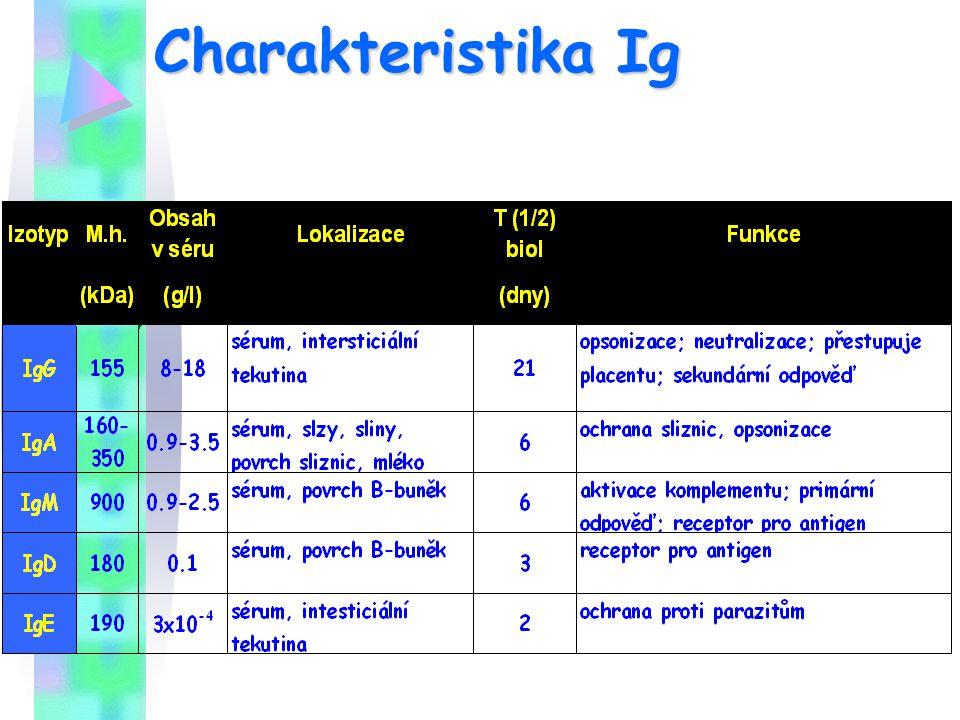 Charakteristika Ig