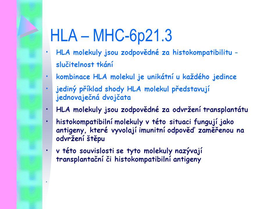 HLA – MHC-6p21.3 HLA molekuly jsou zodpovědné za histokompatibilitu - slučitelnost tkání kombinace HLA molekul je unikátní u každého jedince jediný př