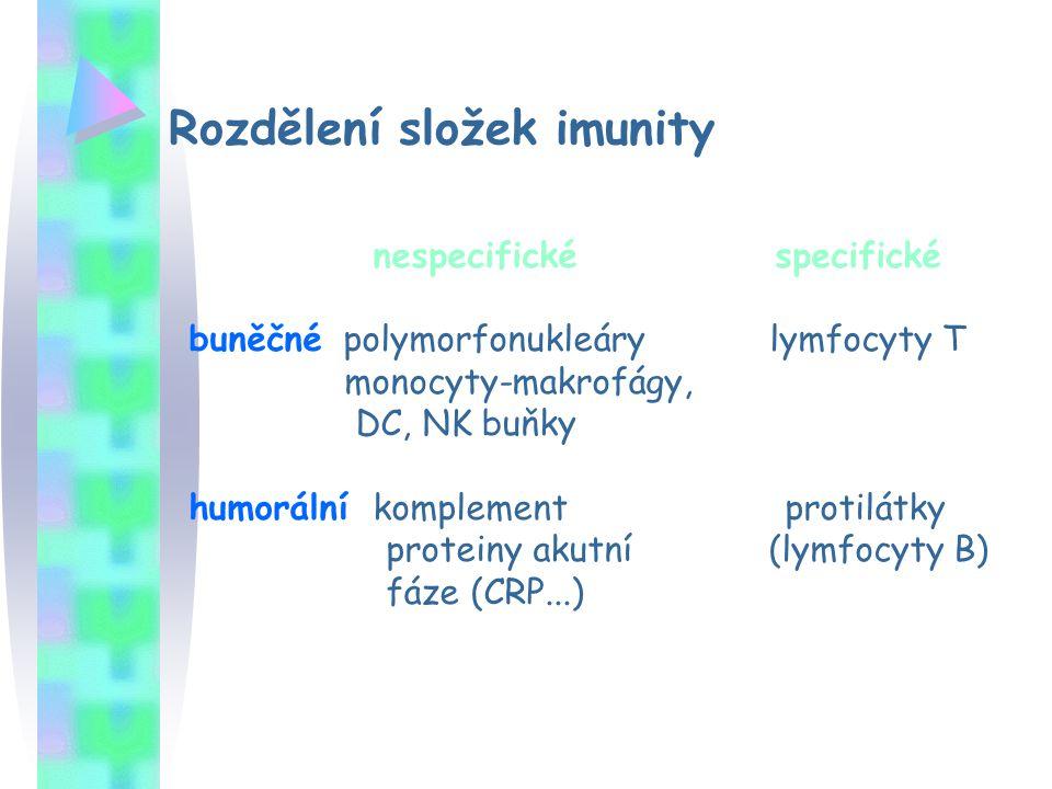 Rozdělení složek imunity nespecifické specifické buněčné polymorfonukleáry lymfocyty T monocyty-makrofágy, DC, NK buňky humorální komplement protilátk