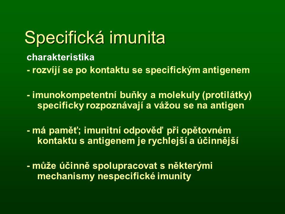 Specifická imunita charakteristika - rozvíjí se po kontaktu se specifickým antigenem - imunokompetentní buňky a molekuly (protilátky) specificky rozpo