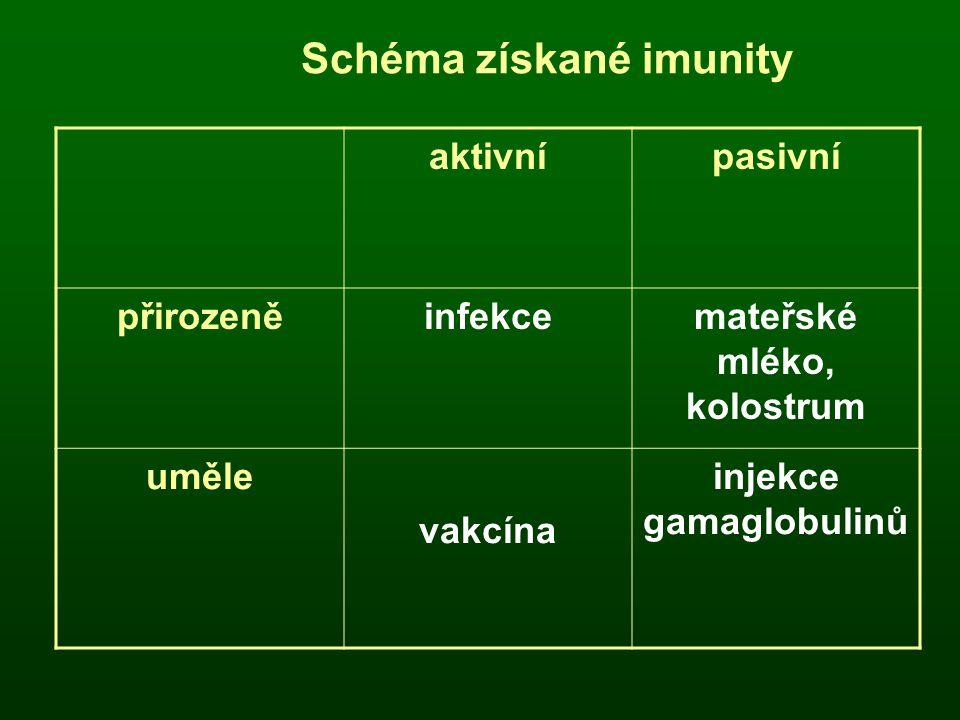 aktivnípasivní přirozeněinfekcemateřské mléko, kolostrum uměle vakcína injekce gamaglobulinů Schéma získané imunity